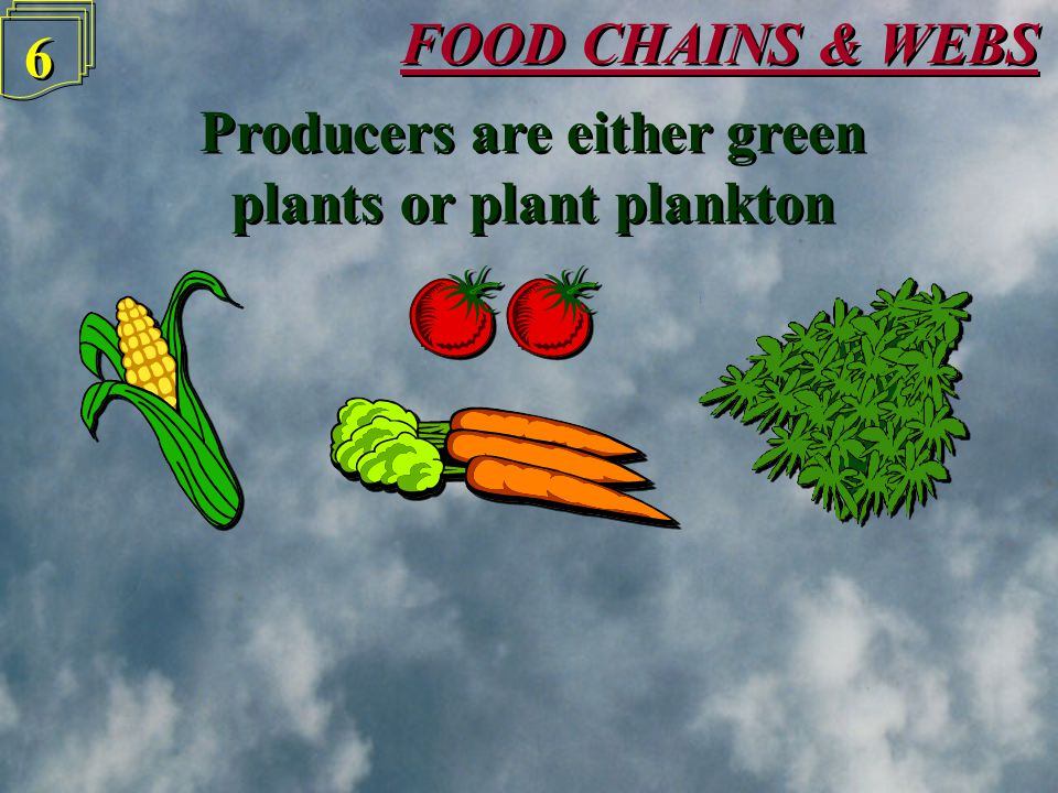FOOD CHAINS & WEBS 5 5 Animals that eat producers are called Consumers Animals that eat producers are called Consumers Producer Primary Consumer Primary Consumer Secondary Consumer Secondary Consumer