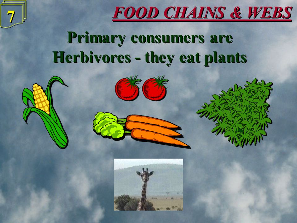 FOOD CHAINS & WEBS 6 6 Producers are either green plants or plant plankton Producers are either green plants or plant plankton