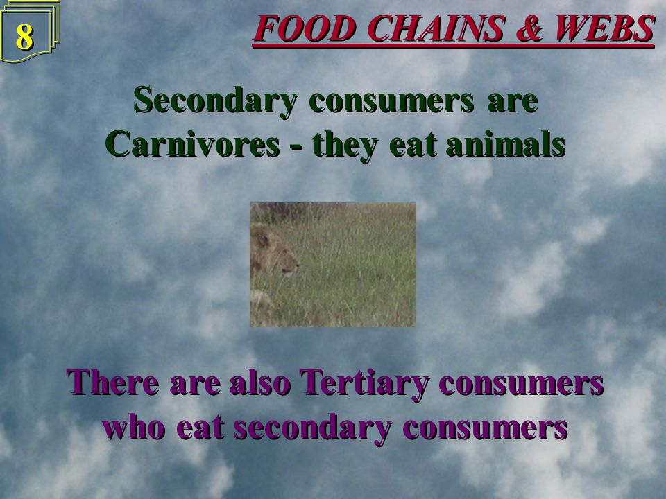 FOOD CHAINS & WEBS 7 7 Primary consumers are Herbivores - they eat plants Primary consumers are Herbivores - they eat plants
