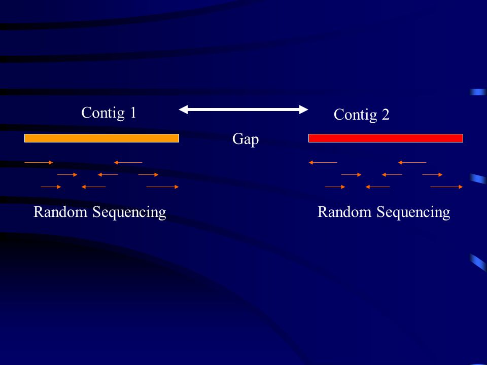 Contig 1 Contig 2 Random Sequencing Gap