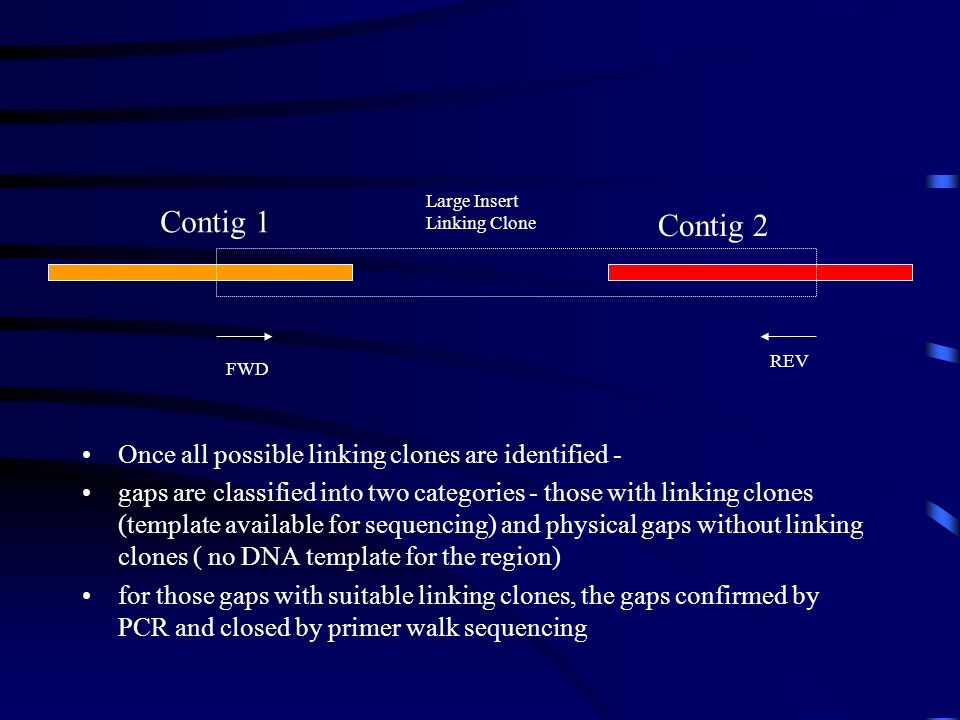 Contig 1 Contig 2 FWD REV Large Insert Linking Clone Once all possible linking clones are identified - gaps are classified into two categories - those