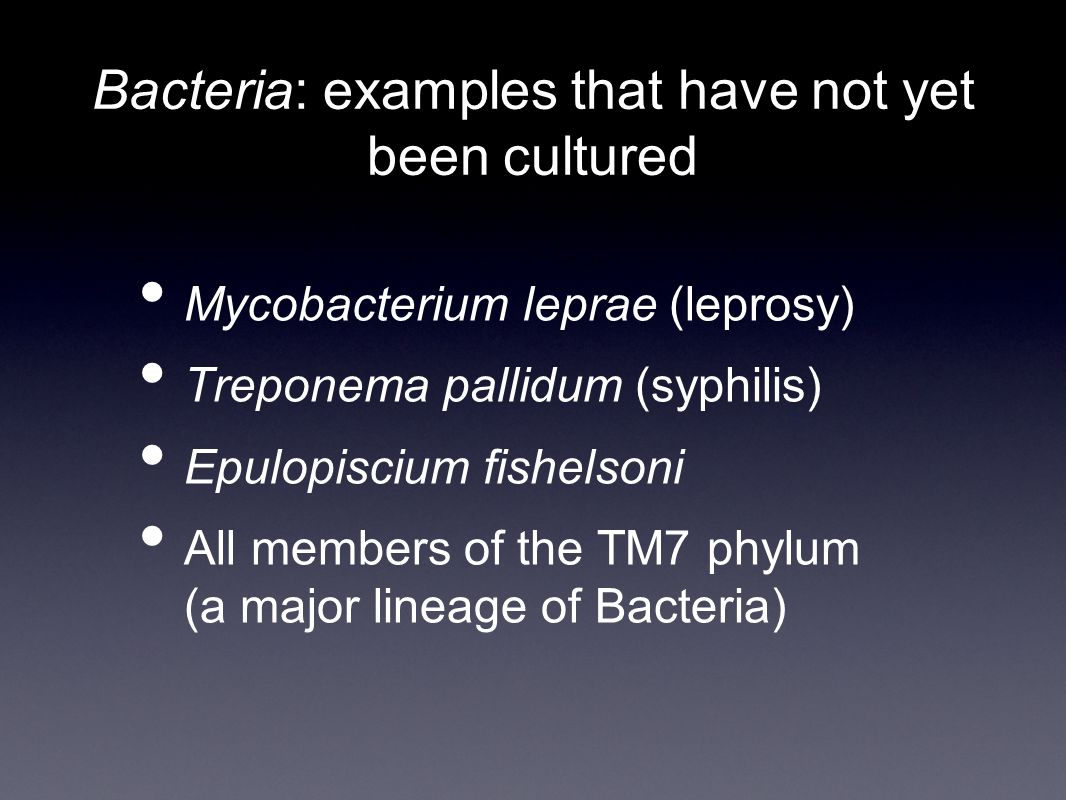 Bacteria: examples that have not yet been cultured Mycobacterium leprae (leprosy) Treponema pallidum (syphilis) Epulopiscium fishelsoni All members of the TM7 phylum (a major lineage of Bacteria)
