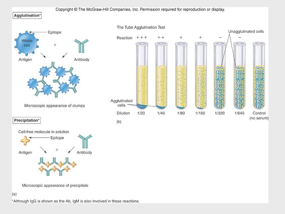 Insert figure 17.10 Cellular\molecular view