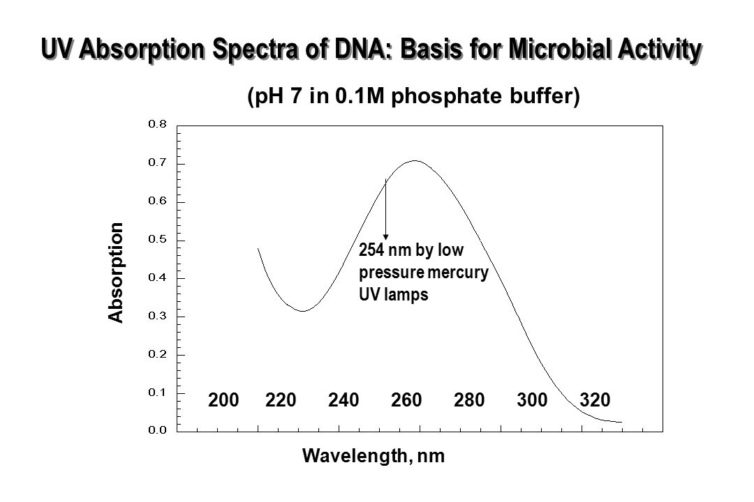 UV Absorption Spectra of DNA: Basis for Microbial Activity Wavelength, nm Absorption (pH 7 in 0.1M phosphate buffer) 200220240260280300320 254 nm by l