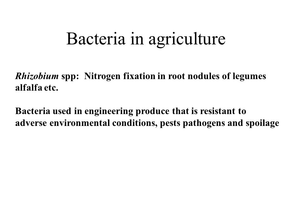 Bacteria in agriculture Rhizobium spp: Nitrogen fixation in root nodules of legumes alfalfa etc.