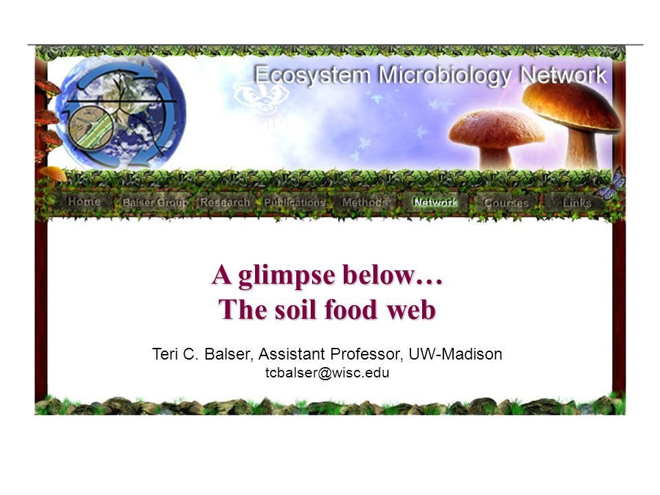 A glimpse below… The soil food web Teri C.