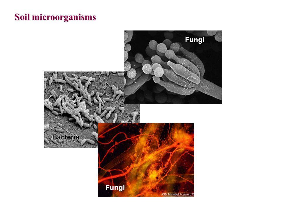 Soil microorganisms Fungi Bacteria