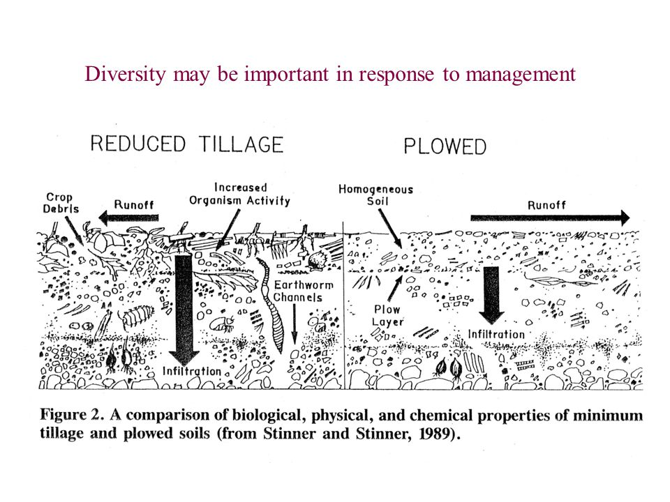 Diversity may be important in response to management