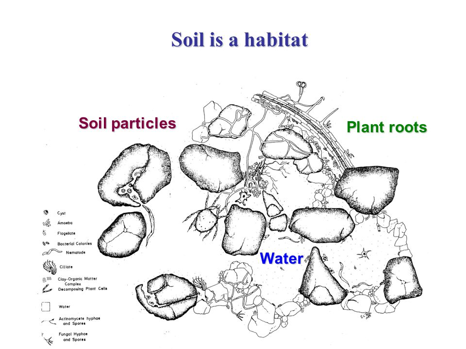 Water Soil particles Plant roots Soil is a habitat