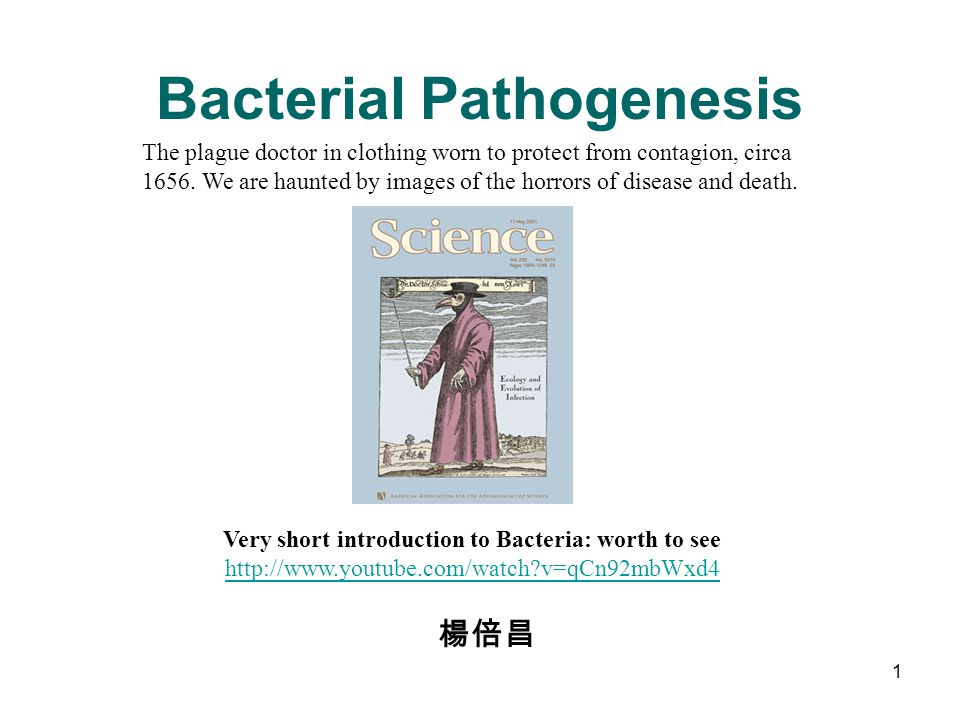 Bacterial Pathogenesis 楊倍昌 1 The plague doctor in clothing worn to protect from contagion, circa 1656. We are haunted by images of the horrors of dise