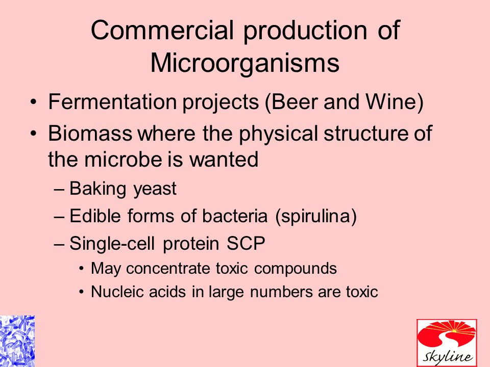 Commercial production of Microorganisms Fermentation projects (Beer and Wine) Biomass where the physical structure of the microbe is wanted –Baking yeast –Edible forms of bacteria (spirulina) –Single-cell protein SCP May concentrate toxic compounds Nucleic acids in large numbers are toxic
