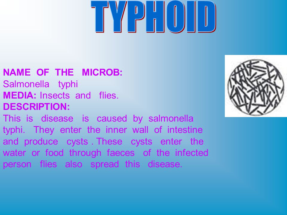NAME OF THE MICROB: Salmonella typhi MEDIA: Insects and flies.