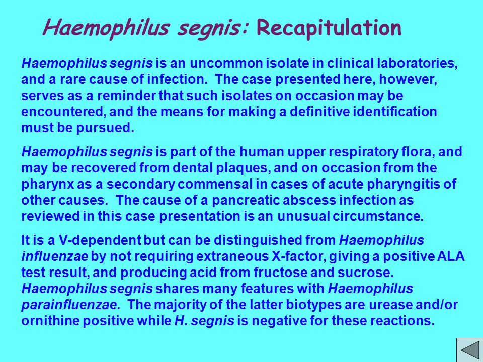 Haemophilus segnis: Recapitulation Haemophilus segnis is an uncommon isolate in clinical laboratories, and a rare cause of infection. The case present