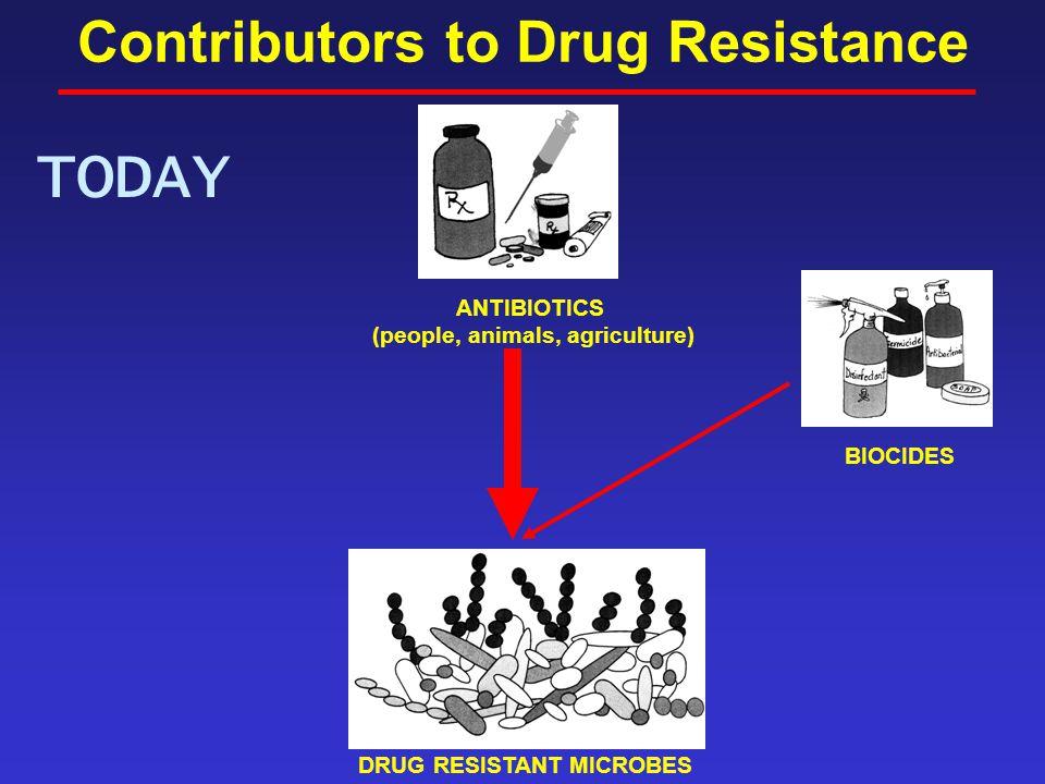 Contributors to Drug Resistance TODAY ANTIBIOTICS (people, animals, agriculture) DRUG RESISTANT MICROBES BIOCIDES
