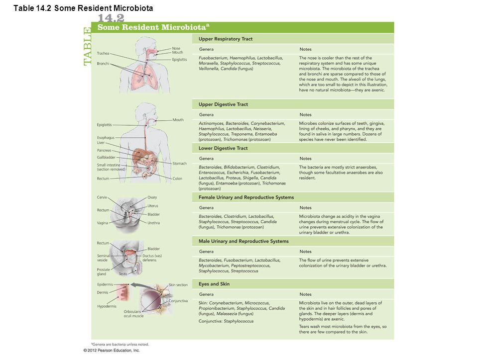 Epidemiology of Infectious Diseases © 2012 Pearson Education Inc.