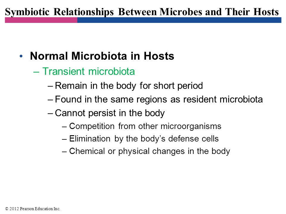 Symbiotic Relationships Between Microbes and Their Hosts Normal Microbiota in Hosts –Transient microbiota –Remain in the body for short period –Found
