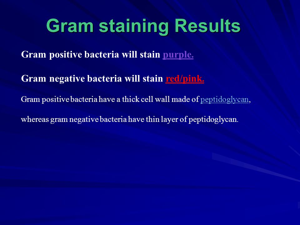 Gram stain of Staphylococcus
