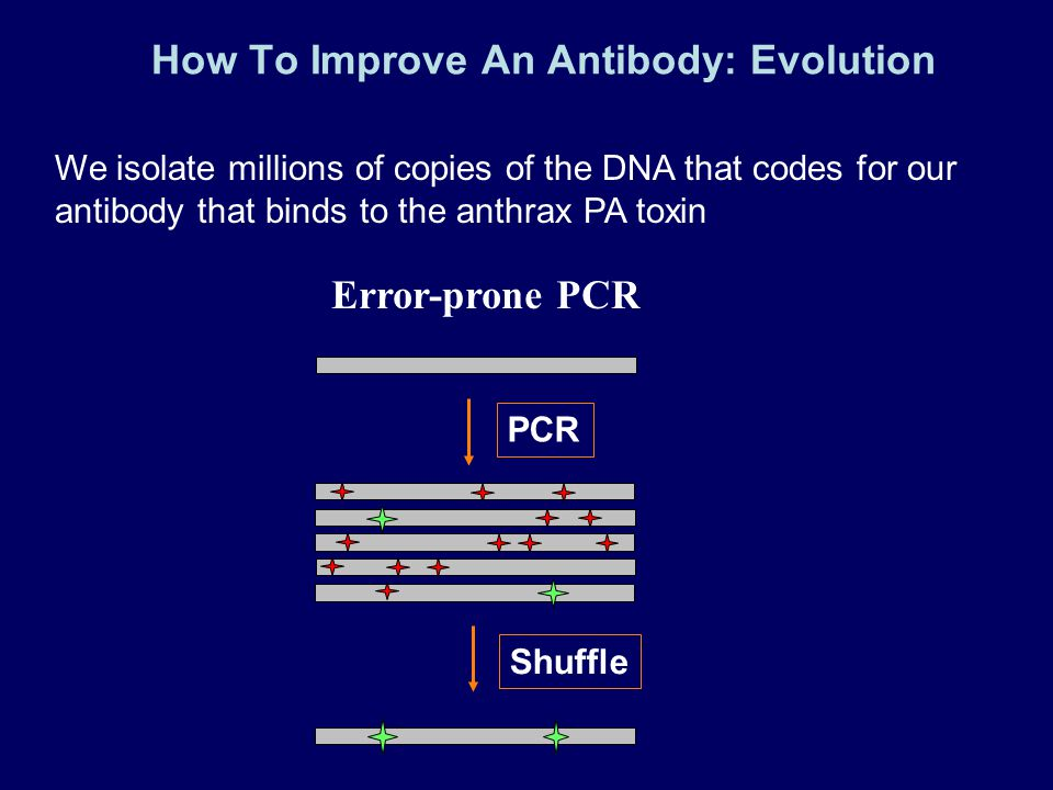How To Improve An Antibody: Evolution We isolate millions of copies of the DNA that codes for our antibody that binds to the anthrax PA toxin Error-pr