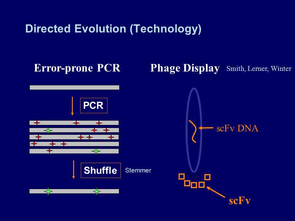 Directed Evolution (Technology) Error-prone PCR PCR Shuffle scFv DNA scFv Phage Display Stemmer Smith, Lerner, Winter