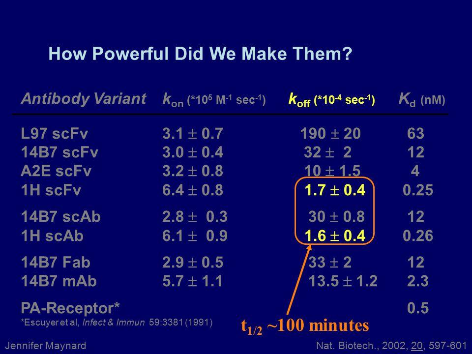 Antibody Variantk on (*10 5 M -1 sec -1 ) k off (*10 -4 sec -1 ) K d (nM) L97 scFv3.1  0.7 190  20 63 14B7 scFv3.0  0.4 32  2 12 A2E scFv3.2  0.8