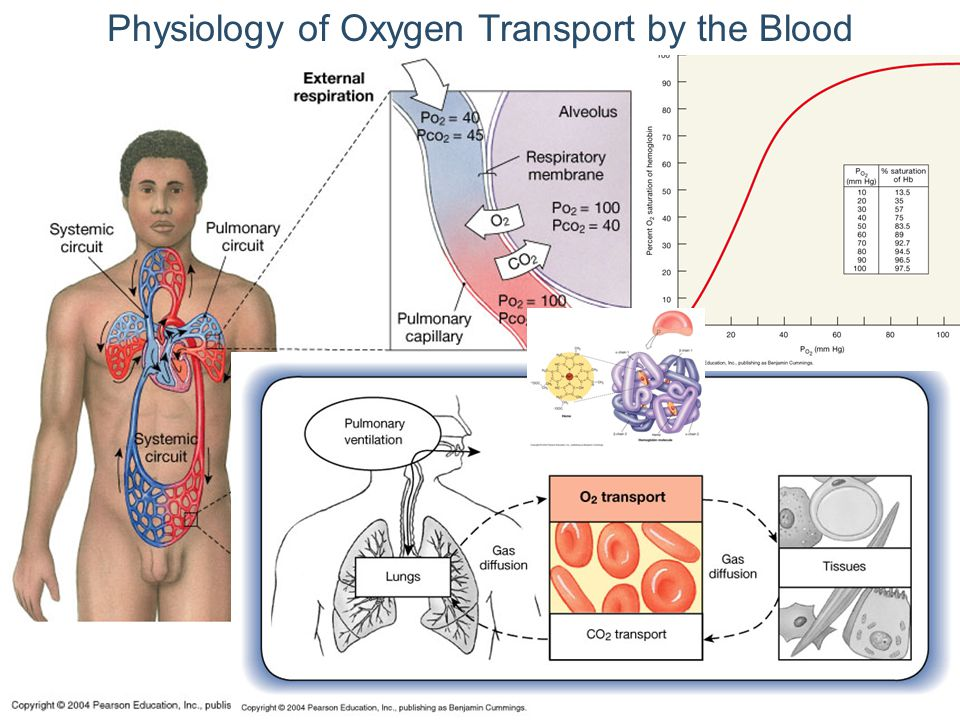 Physiology of Oxygen Transport by the Blood