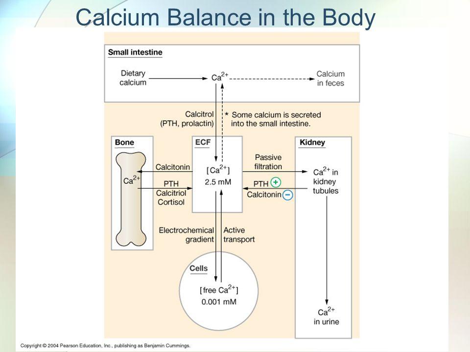Calcium Balance in the Body
