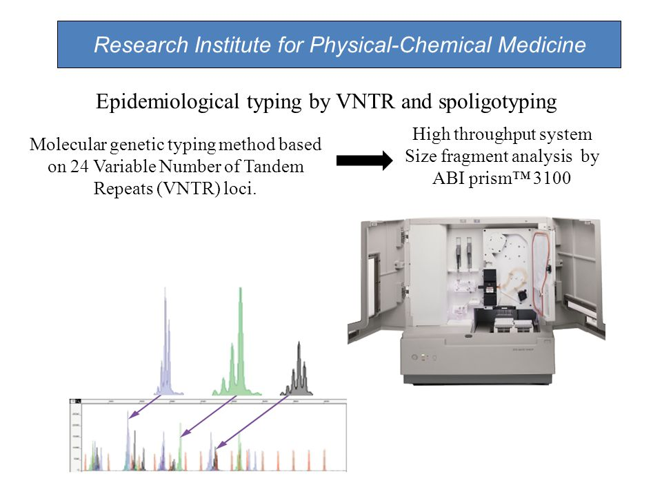 Molecular genetic typing method based on 24 Variable Number of Tandem Repeats (VNTR) loci.