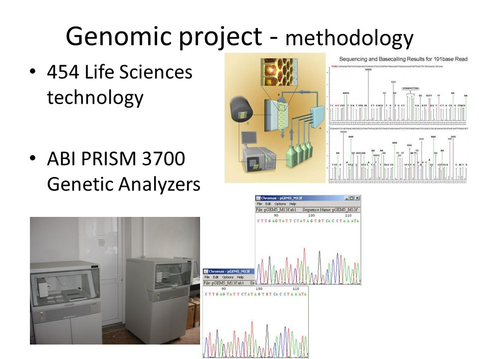 Genomic project - methodology 454 Life Sciences technology ABI PRISM 3700 Genetic Analyzers