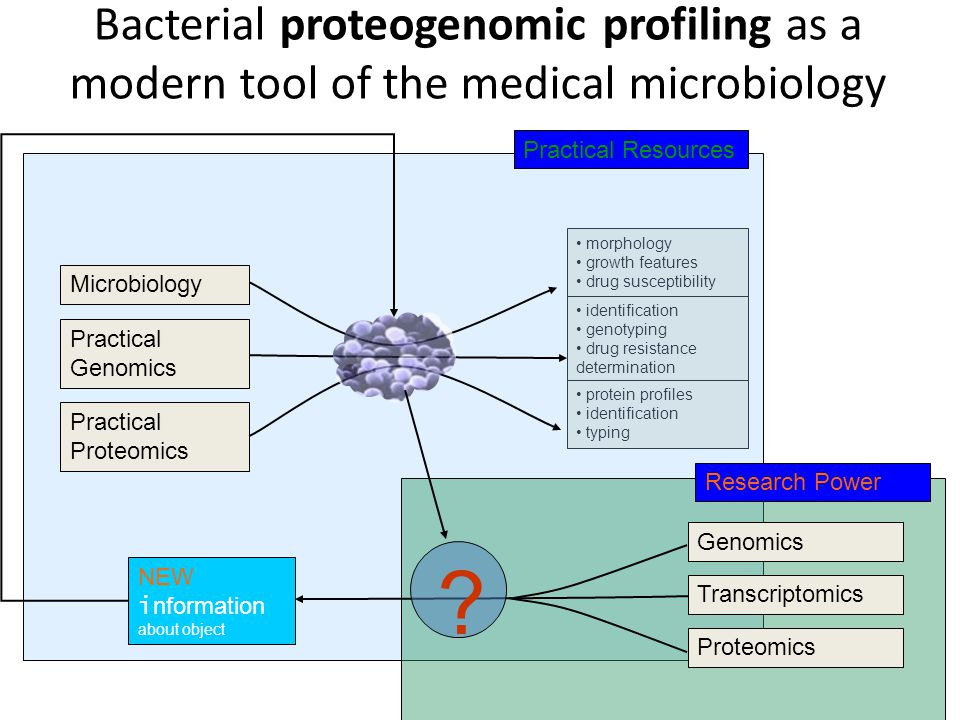 morphology growth features drug susceptibility identification genotyping drug resistance determination protein profiles identification typing Microbiology Practical Genomics Practical Proteomics Transcriptomics Research Power Genomics Proteomics NEW i nformation about object Practical Resources .
