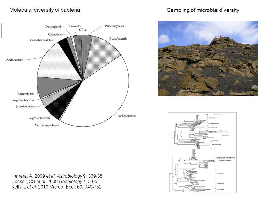 Molecular diversity of bacteria Sampling of microbial diversity Herrera, A.