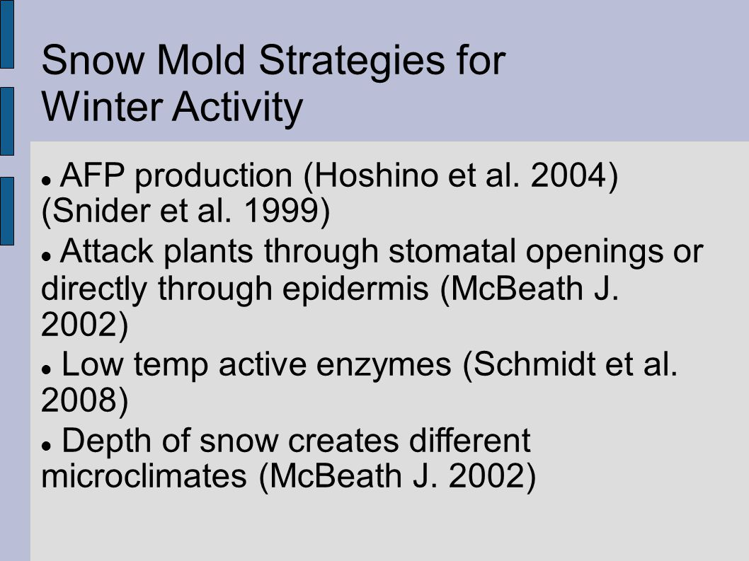 Snow Mold Strategies for Spring Snow Melt and Summer Dormancy in the form of Spores: Snow Scard (McBeath J.