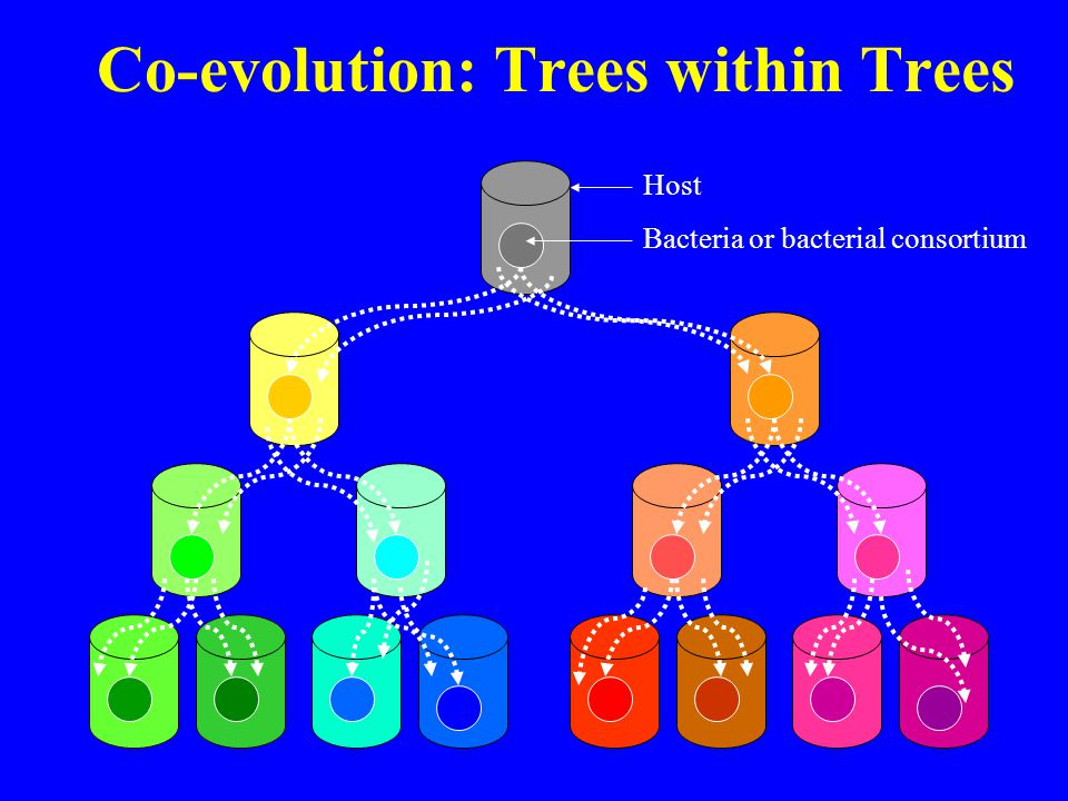 Co-evolution: Trees within Trees Host Bacteria or bacterial consortium