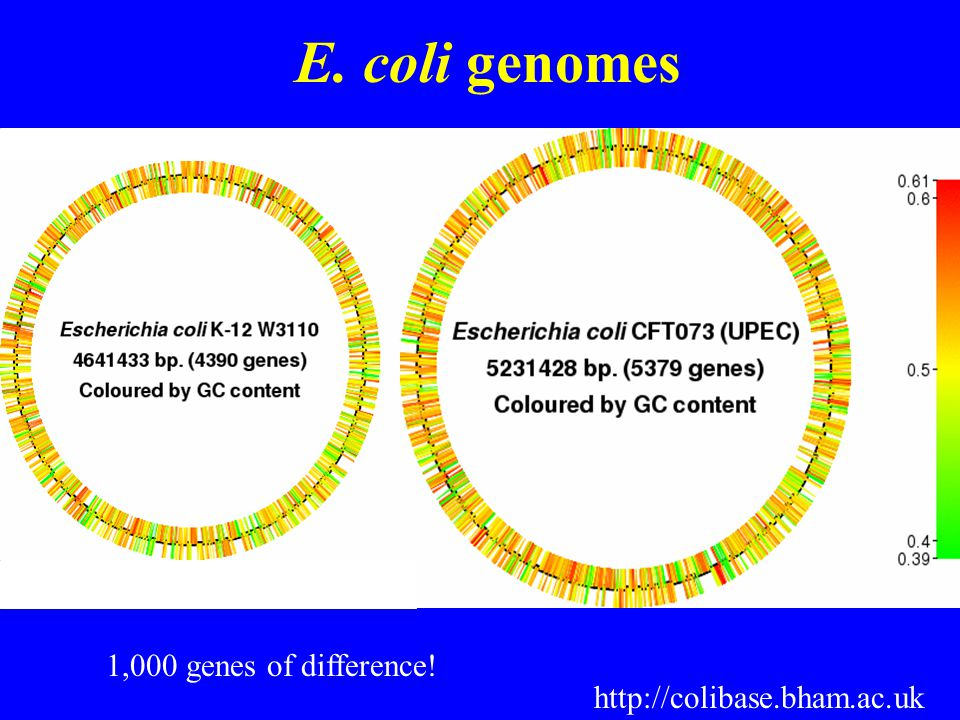 E. coli genomes http://colibase.bham.ac.uk 1,000 genes of difference!