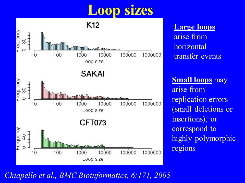 Loop sizes Chiapello et al., BMC Bioinformatics, 6:171, 2005 Small loops may arise from replication errors (small deletions or insertions), or corresp