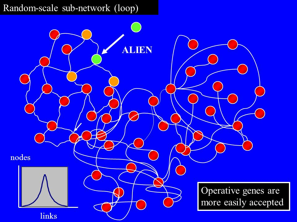 Random-scale sub-network (loop) ALIEN nodes links Operative genes are more easily accepted