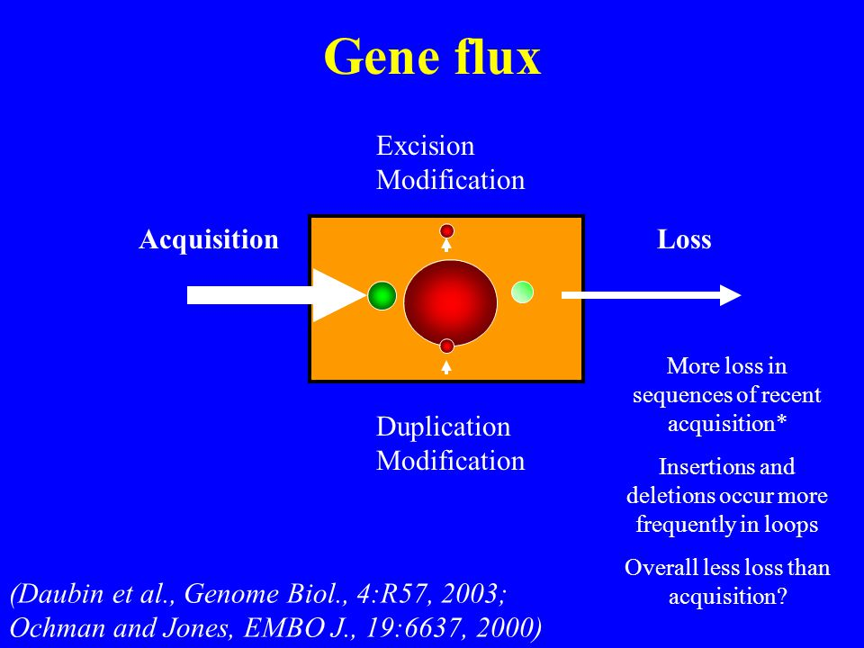 Gene flux AcquisitionLoss Duplication Modification Excision Modification More loss in sequences of recent acquisition* Insertions and deletions occur