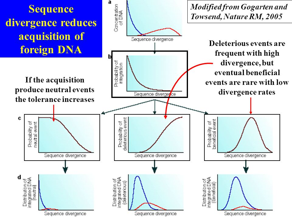 Sequence divergence reduces acquisition of foreign DNA If the acquisition produce neutral events the tolerance increases Deleterious events are freque