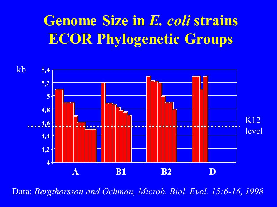 Genome Size in E. coli strains ECOR Phylogenetic Groups K12 level kb Data: Bergthorsson and Ochman, Microb. Biol. Evol. 15:6-16, 1998