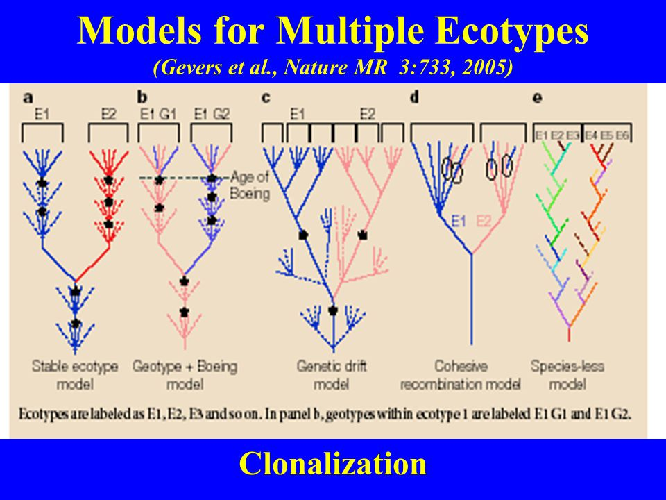 Models for Multiple Ecotypes (Gevers et al., Nature MR 3:733, 2005) Clonalization