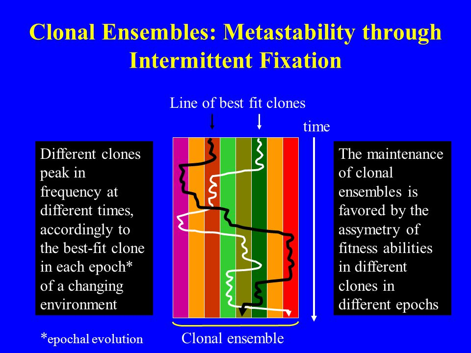 Clonal Ensembles: Metastability through Intermittent Fixation Different clones peak in frequency at different times, accordingly to the best-fit clone
