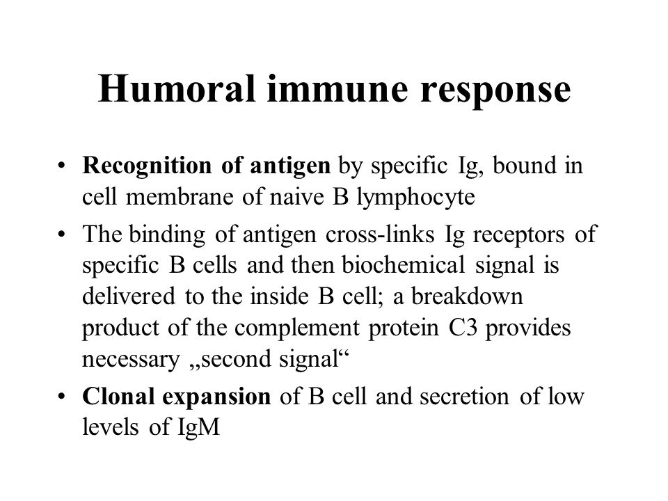 Humoral immune response Protein antigens activate CD4+ T helper cells after presentation of specific antigen T helper cells exprime CD40L on their surface and secrete cytokines → proliferation and differentiation of antigen-specific B cells, isotype switching, affinity maturation