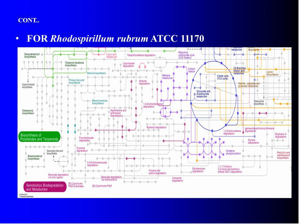 CONT.. FOR Rhodospirillum rubrum ATCC 11170