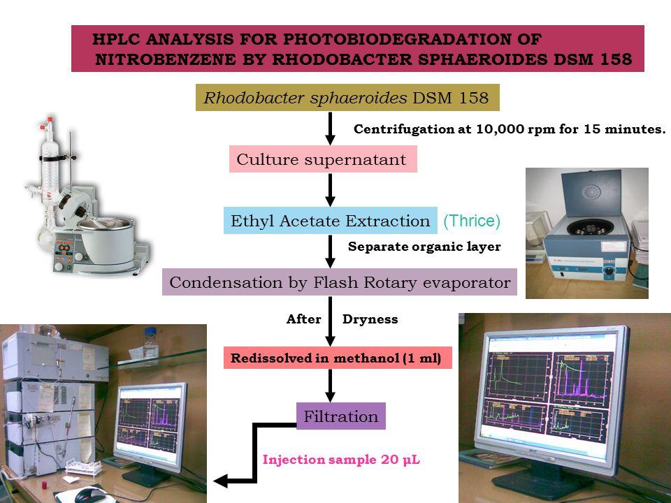 HPLC ANALYSIS FOR PHOTOBIODEGRADATION OF NITROBENZENE BY RHODOBACTER SPHAEROIDES DSM 158 Rhodobacter sphaeroides DSM 158 Culture supernatant Centrifugation at 10,000 rpm for 15 minutes.