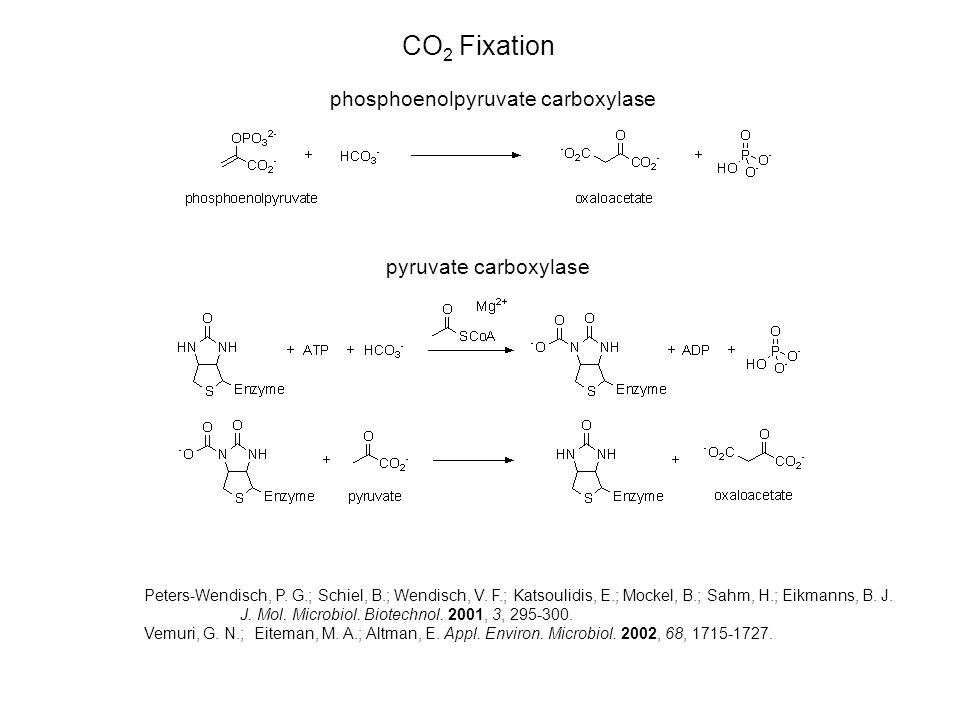 CO 2 Fixation phosphoenolpyruvate carboxylase pyruvate carboxylase Peters-Wendisch, P.