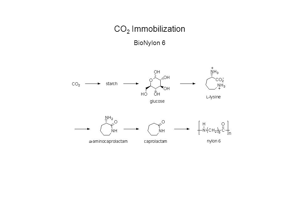 CO 2 Immobilization BioNylon 6