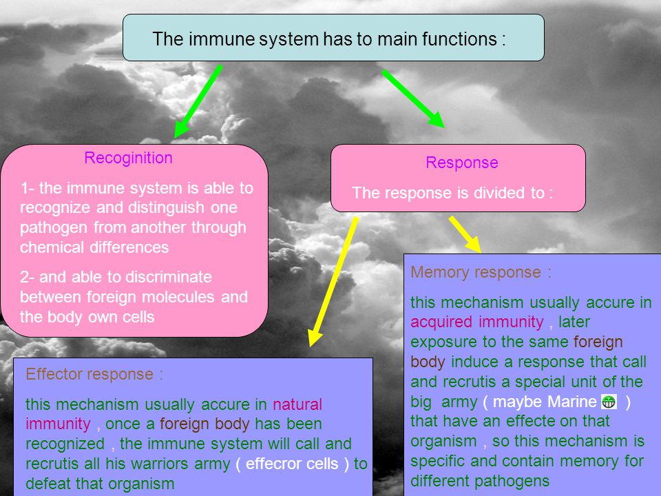 The immune system has to main functions : Recoginition 1- the immune system is able to recognize and distinguish one pathogen from another through chemical differences 2- and able to discriminate between foreign molecules and the body own cells Response The response is divided to : Effector response : this mechanism usually accure in natural immunity, once a foreign body has been recognized, the immune system will call and recrutis all his warriors army ( effecror cells ) to defeat that organism Memory response : this mechanism usually accure in acquired immunity, later exposure to the same foreign body induce a response that call and recrutis a special unit of the big army ( maybe Marine ) that have an effecte on that organism, so this mechanism is specific and contain memory for different pathogens