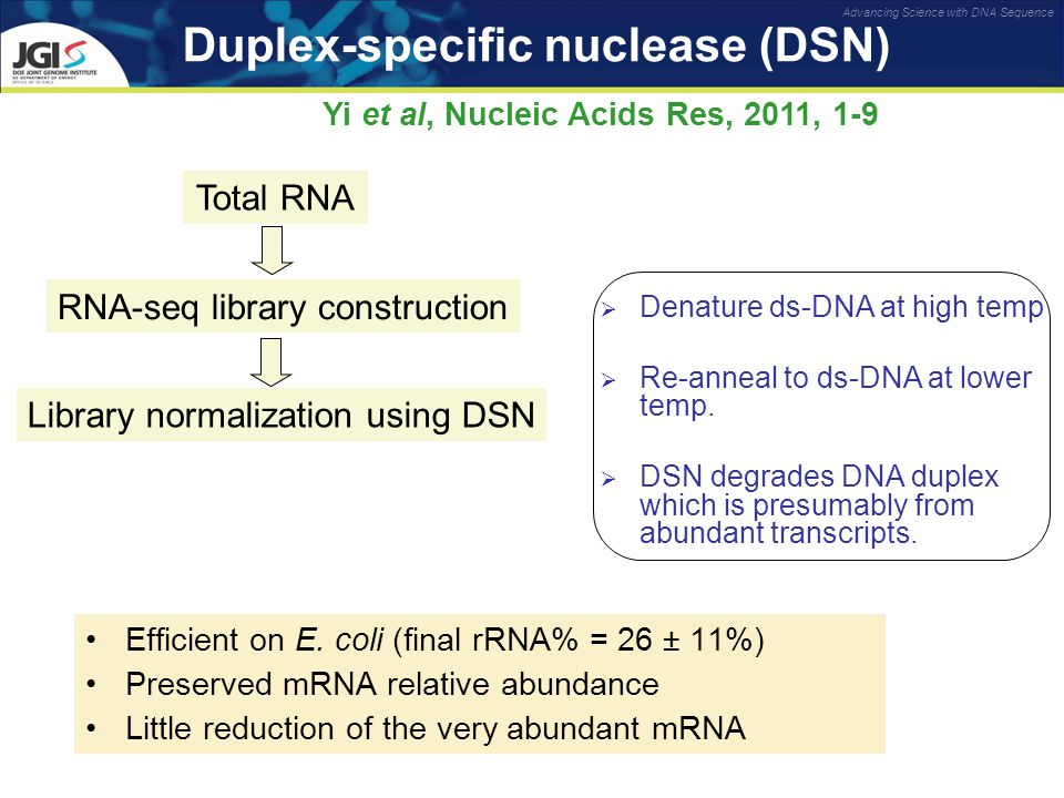 Advancing Science with DNA Sequence Duplex-specific nuclease (DSN) Efficient on E.