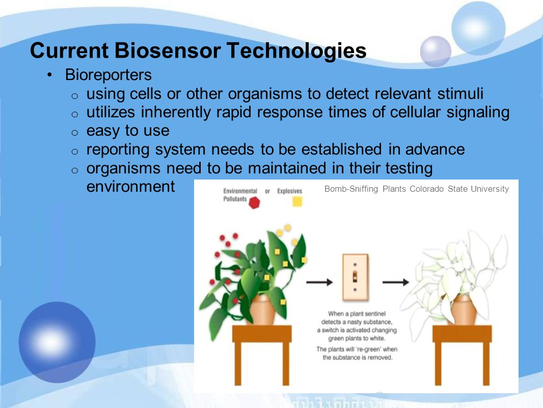 Current Biosensor Technologies Bioreporters o using cells or other organisms to detect relevant stimuli o utilizes inherently rapid response times of cellular signaling o easy to use o reporting system needs to be established in advance o organisms need to be maintained in their testing environment Bomb-Sniffing Plants Colorado State University