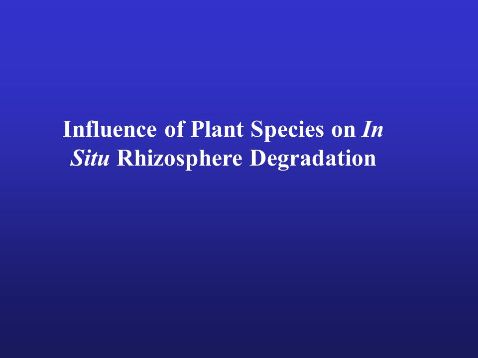 Influence of Plant Species on In Situ Rhizosphere Degradation