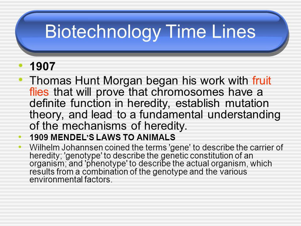 Biotechnology Time Lines 1907 Thomas Hunt Morgan began his work with fruit flies that will prove that chromosomes have a definite function in heredity